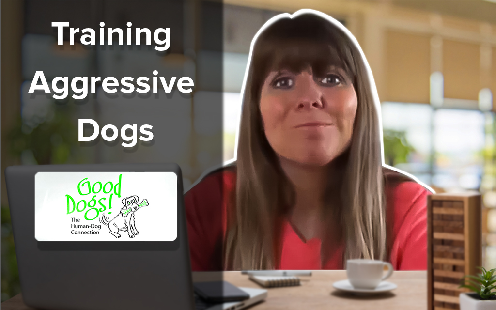 Training Aggressive Dogs and How to Stop Aggressive Behaviors