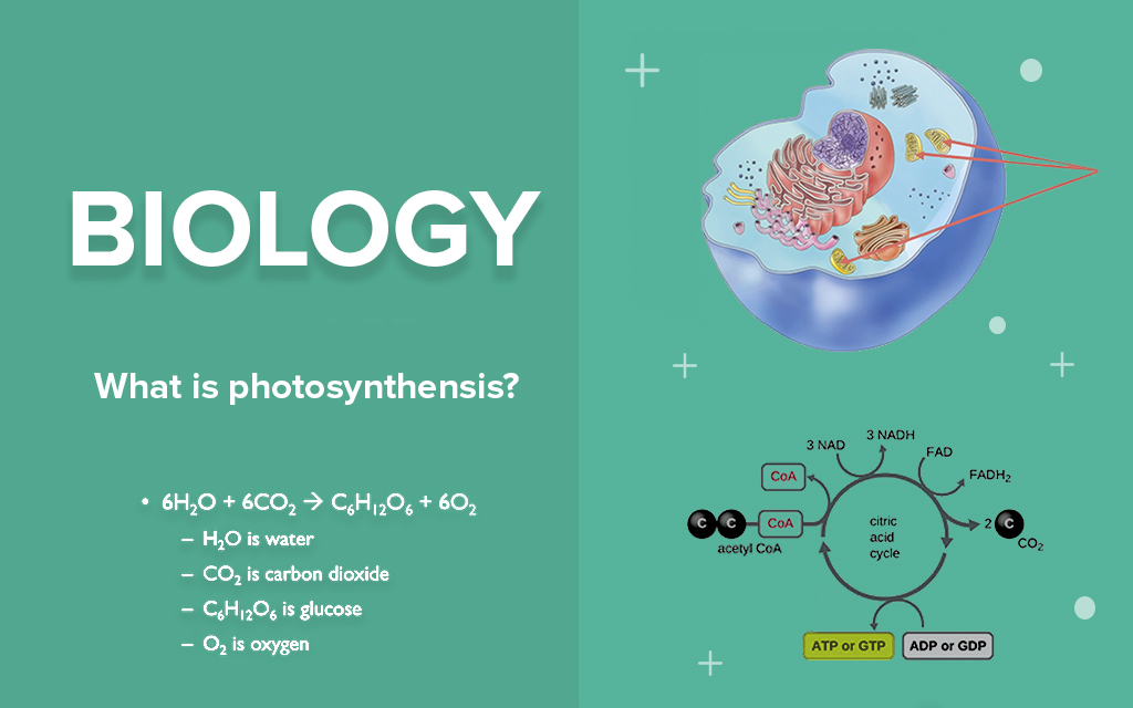 Comprehensive Biology Class For All Levels