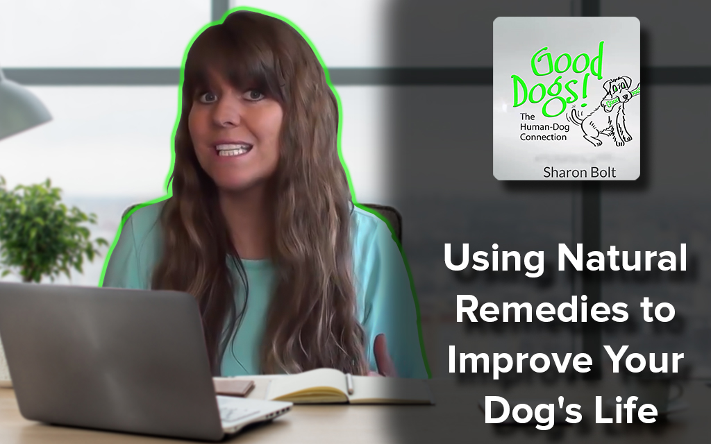 Using Natural Remedies to Improve Your Dog's Life