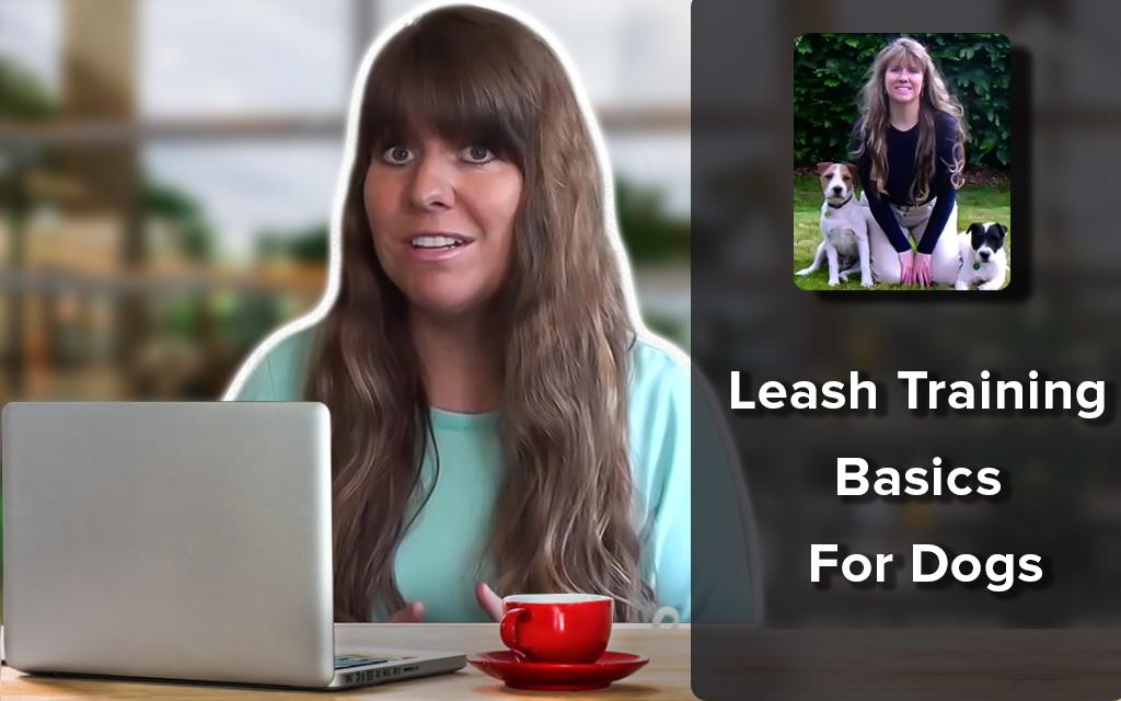 Leash Training Basics For Dogs