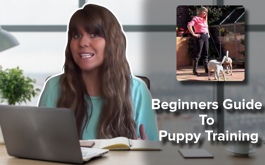 Beginners Guide to Puppy Training