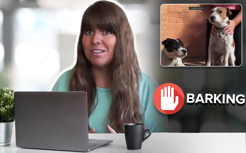 How To Train Your Dog to Stop Barking